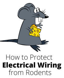 How to Protect Electrical Wiring from Rodents in Colorado